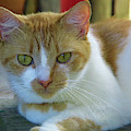 Miss Kitty by D Hackett
