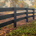 Misty Morning Walk by Mary Lou Chmura