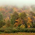 Misty Mountain by Rod Best