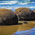 Moeraki Boulders, New Zealand by Lyl Dil Creations