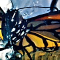 Monarch Butterfly by Rob Hans