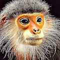Monkey 2 by Russ Carts