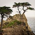 Monterey Peninsula II Color by David Gordon