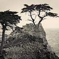 Monterey Peninsula II Toned by David Gordon