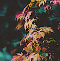 Moody Autumn Leaves by Andrea Anderegg