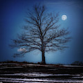 Moon Over Liberty Tree by John Meader