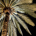 Moon Through Palm Tree by Photo By Stuart Gleave