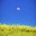Moonfield by Stefan H Unger