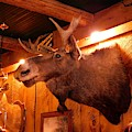 Moose At Flanagans Pub And Grill Schroon Lake New York by Rose Santuci-Sofranko