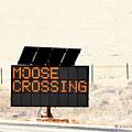 Moose Crossing Highway Sign by Kae Cheatham