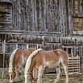 Horses By The Barn Sugarbush Farm by Edward Fielding