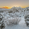Morning Breaks On Snow Covered Ground by Matthew Irvin