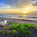 Morning Glory At The Beach by Debra and Dave Vanderlaan