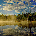 Morning Mist, Wildlife Pond  by Jeff Sinon