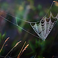 Morning Spider by Bill Wakeley