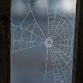 Morning Spider Web by Robert Moorhead