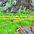 Moss And Leaves Ground Cover Genesis 1 31 by Lisa Wooten
