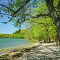Moss Creek Beach by Susan Rydberg