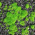 Moss Green by Sharon Popek