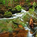 Mossy Glen Rollers by Shell Ette