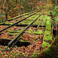 Mossy Train Track In Fall by Lj Lambert