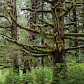 Mossy Trees by Robert Potts
