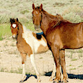 Mother And Daughter Wild Mustang by Judi Dressler