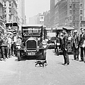 Mother Cat Blackie Halts Traffic As She by New York Daily News Archive