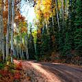 Mountain Aspen Autumn Road by OLena Art - Lena Owens