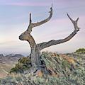 Mountain Ridge Shape And Form by Leland D Howard