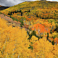 Mountains Burst With Fall Color Along Last Dollar Road by Ray Mathis