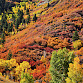 Mountainside Colors Along Highway 133 South Of Mcclure Pass by Ray Mathis