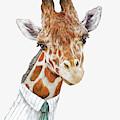 Mr Giraffe by Animal Crew