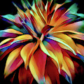 Multi Color Floral Abstract by Julie Palencia