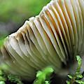 Mushroom Spaceship by Bruce Gourley