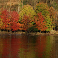Muted Colors At  End Of Fall Paintography by Dan Friend