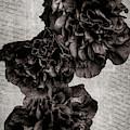 My Hollyhocks B  W by Donna Kennedy