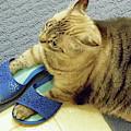 My - Shoe - Diva by D Hackett