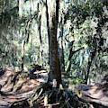 Mysterious Florida Landscape by Carol Groenen