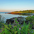 Nahant Ma Egg Rock Through The Flowers by Toby McGuire