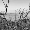 Nahant Ma Egg Rock Through The Trees Black And White by Toby McGuire