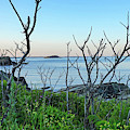 Nahant Ma Egg Rock Through The Trees by Toby McGuire