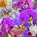 Naples Orchid Collage by Gene Norris