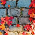 Natural Autumn Leaf Background  by Marina Usmanskaya