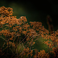 Natural Halloween Colors by Bill Posner