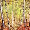 Nature's Color by Scott Kemper