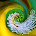 Nature's Spiral by Susan Rydberg