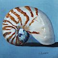 Nautilus by Kristine Kainer
