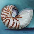 Nautilus Shell by Kristine Kainer