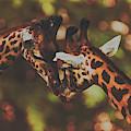 Necking by Pixabay